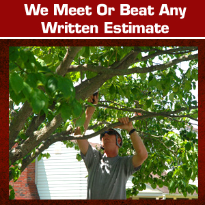 A-Way Tree Experts Estimate